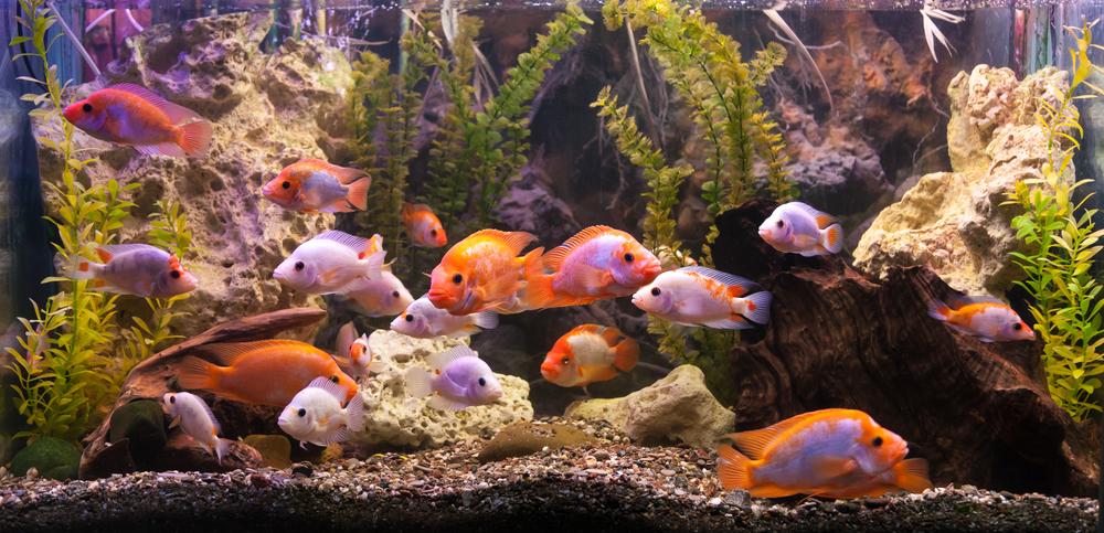 Comment entretenir votre aquarium