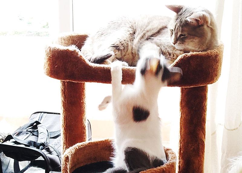 «Pourquoi mon chat me lèche-t-il les cheveux?»  13 théories qui pourraient expliquer pourquoi