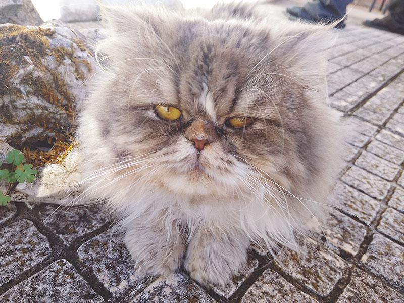 Pourquoi mon chat me fait-il un clin d'œil? Qu'est-ce que cela signifie lorsqu'un chat vous fait un clin d'œil?