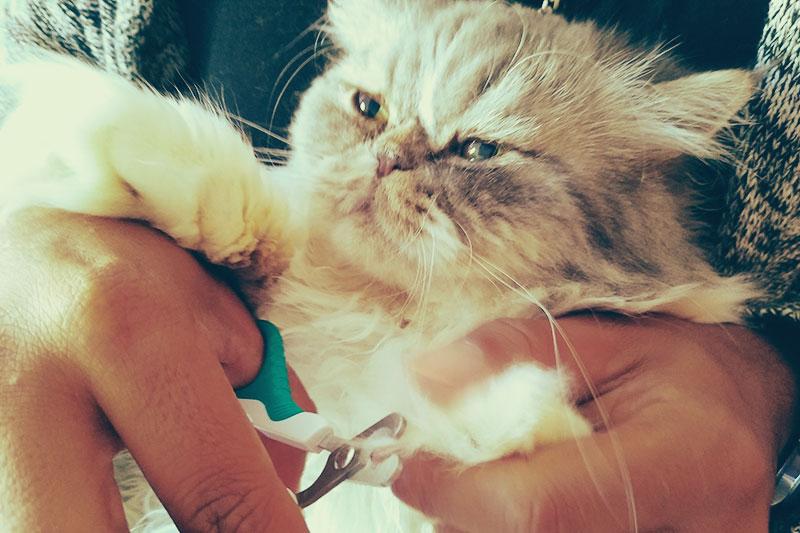 Mon chat ne me laissera pas couper ses ongles