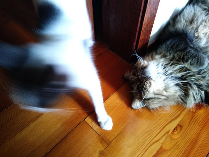 """""""Les chats maudissent-ils? Certains le pensent; Qu'en penses-tu?"""""""