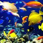 10 raisons pour lesquelles les poissons font de bons animaux de compagnie