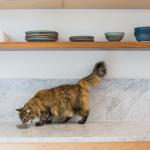 Combien de temps pouvez-vous laisser la nourriture pour chat?