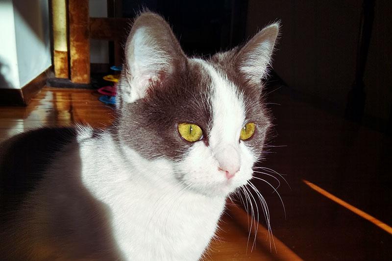 Comment administrer des médicaments à un chat (liquide ou solide): 6 astuces faciles