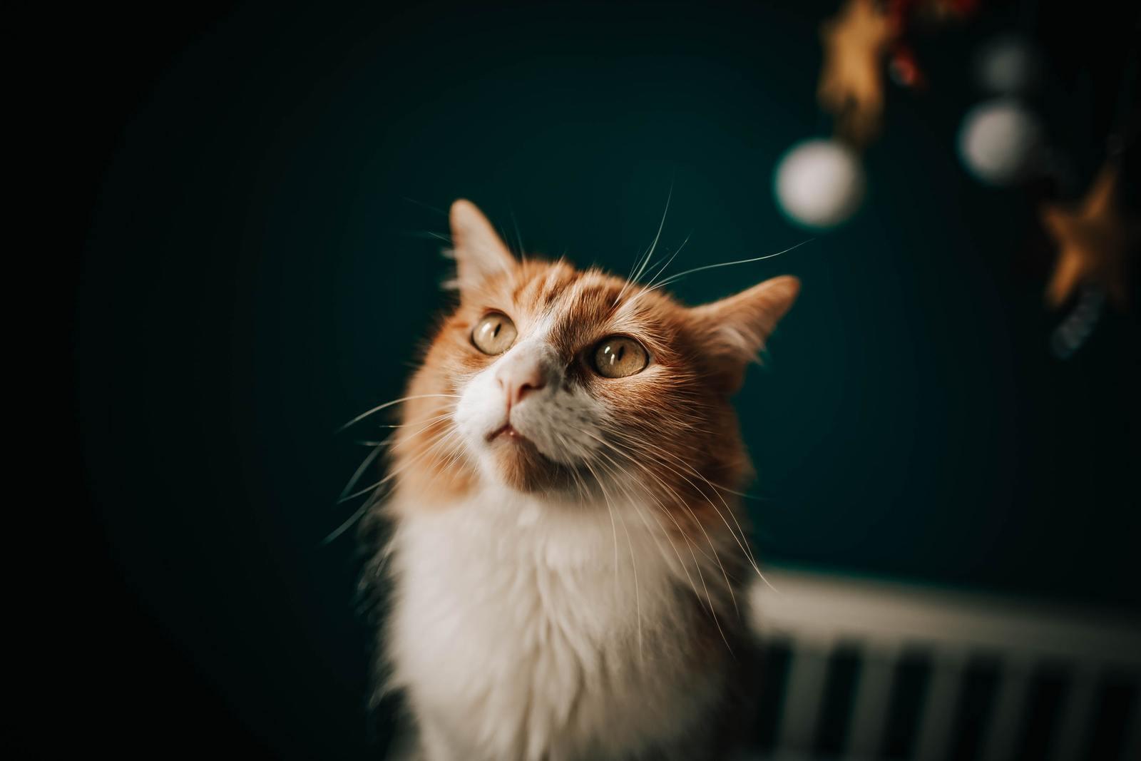 Quand changer la nourriture de votre chat