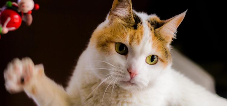 Enrichir l'environnement de votre chat