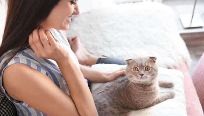 Pourquoi les chats s'assoient-ils sur vos genoux?