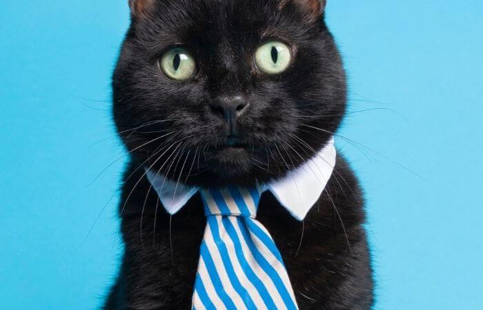 Les chats aiment-ils porter des vêtements?