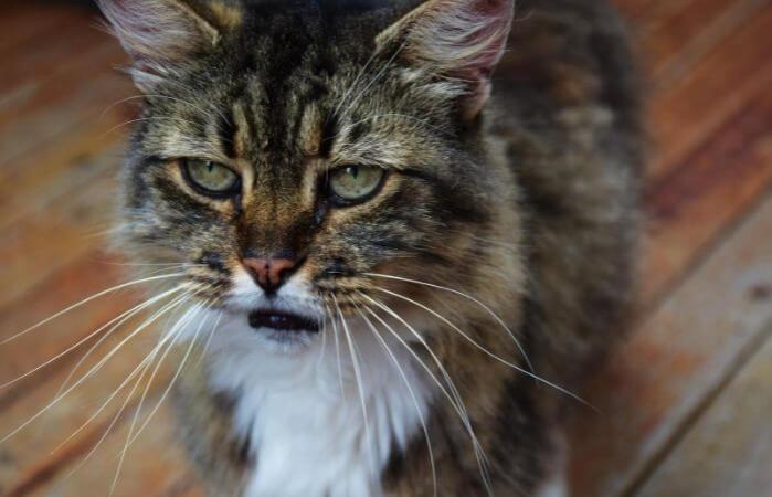 Les chats gardent-ils rancune et pardonnent-ils?