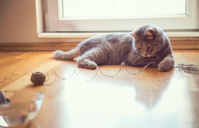 Pourquoi les chats aiment-ils les cordes?