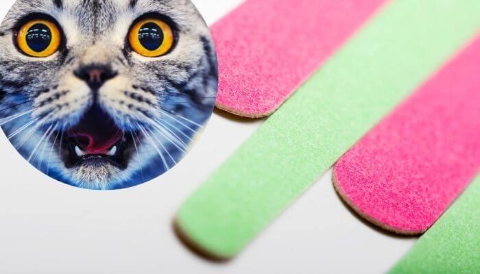 Pourquoi les chats aiment les limes à ongles?
