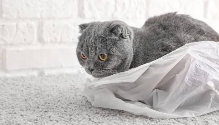 Pourquoi les chats aiment-ils les sacs en plastique?