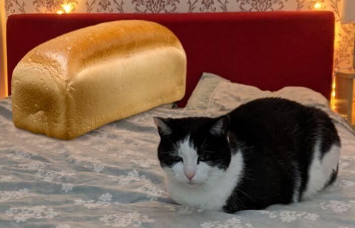 Un pain de chat qu'est-ce que c'est?